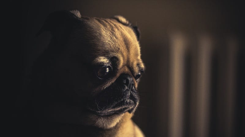 """There's no reason to keep your dogs unvaccinated over fears of """"canine autism."""""""