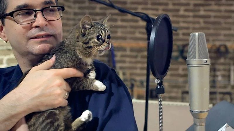 Illustration for article titled Based on this picture, it's safe to assume that Steve Albini and Lil Bub are best friends now