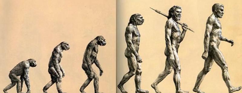 Illustration for article titled Esta imagen que llevas viendo toda tu vida sobre la evolución humana tiene poco que ver con la realidad