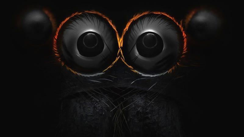 Los ojos de una araña saltadora. Imagen: Yousef Al Habshi — 9 aumentos (Nikon)