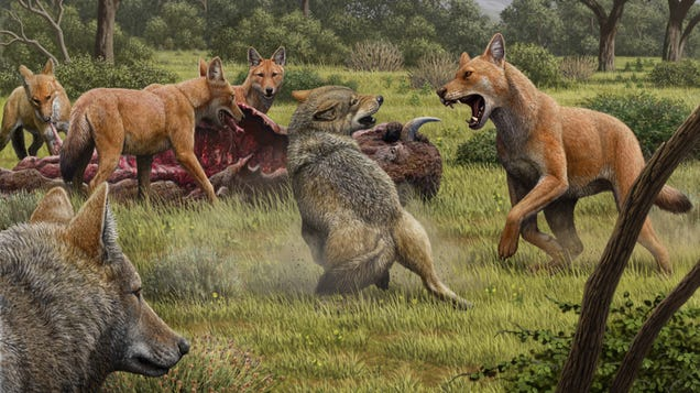 The Story of Real-Life Dire Wolves Is Finally Emerging