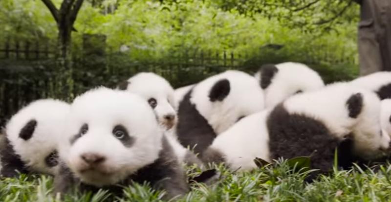 Image: National Geographic/YouTube