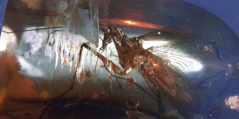 Illustration for article titled This Mean Predatory Cockroach Was Caught in Amber 100 Million Years Ago