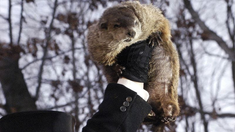 Illustration for article titled Punxsutawney Phil Beheaded For Inaccurate Prediction On Annual Groundhog Slaughtering Day