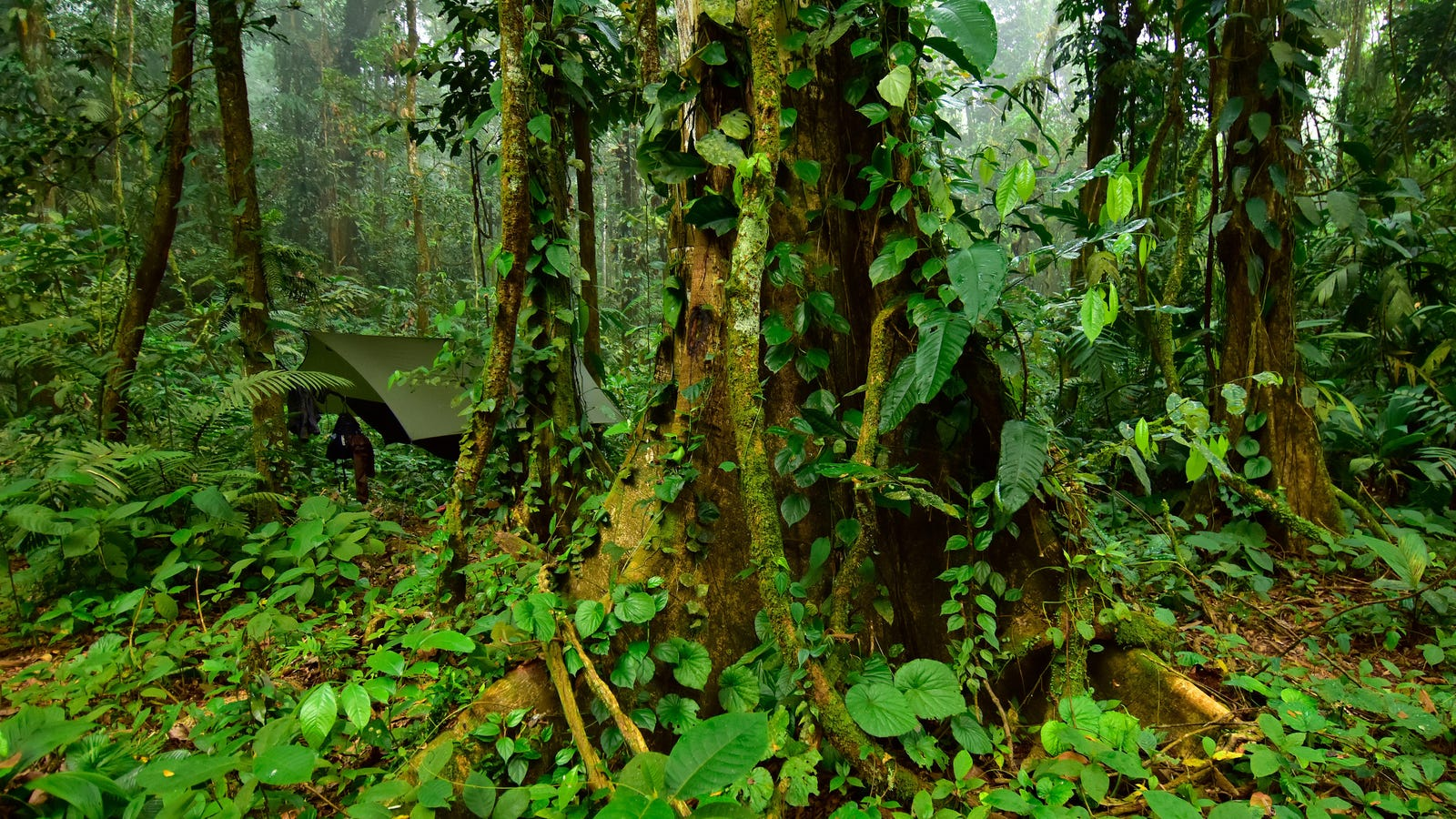 Exploration of 'Lost City' in Honduras Uncovers Trove of Rare Life Forms