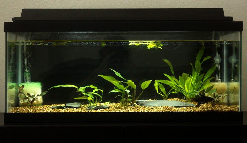 Illustration for article titled Fishlopposite