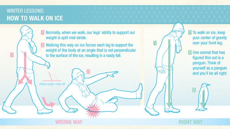 Illustration for article titled Penguins teach humans to walk on ice without getting injured