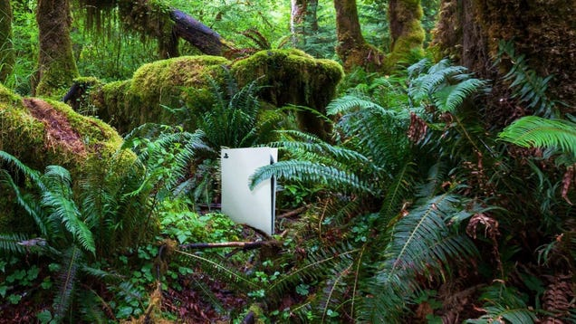Environmentalism Win: For Every PS5 Sold, Sony Will Plant A PS4 In The Amazon Rainforest
