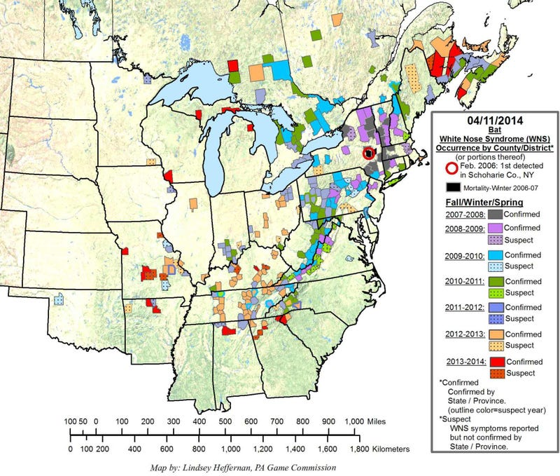 Illustration for article titled A Bat-Killing Fungus Has Spread Over Half The Country