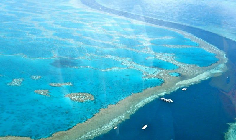 Pérdidas millonarias en Australia por daños en la Gran Barrera de Coral
