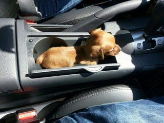 Illustration for article titled Cup Holder? Nope, Now It's A Pup Holder!