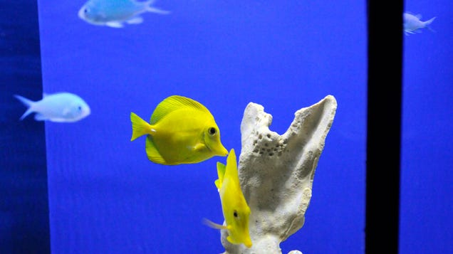 Gizmodo Dot Com Should Pay For Me To Buy An Aquarium