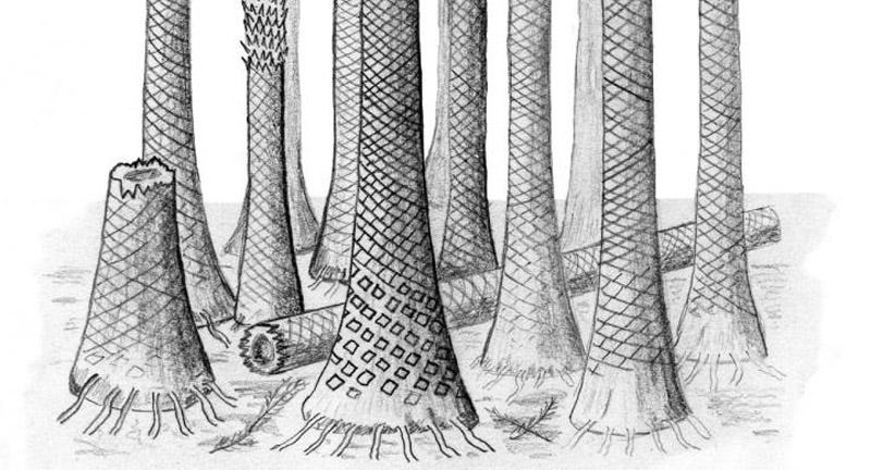 Illustration for article titled A Fossil Tropical Forest Is Helping Solve an Ancient Climate Mystery