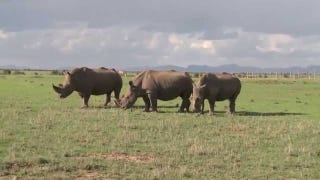 These Are The Last Five Northern White Rhinos On Earth