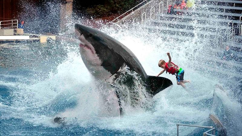 Illustration for article titled SeaWorld To Discontinue Great White Shark Ride