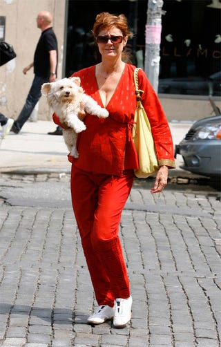 Illustration for article titled Susan Sarandon's Dog Is Woman's Breast Friend