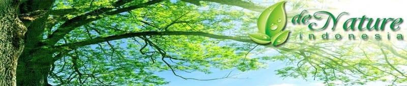 Illustration for article titled Mengobati Penyakit Paru Paru PPOK Menggunakan Tumbuhan Herbal
