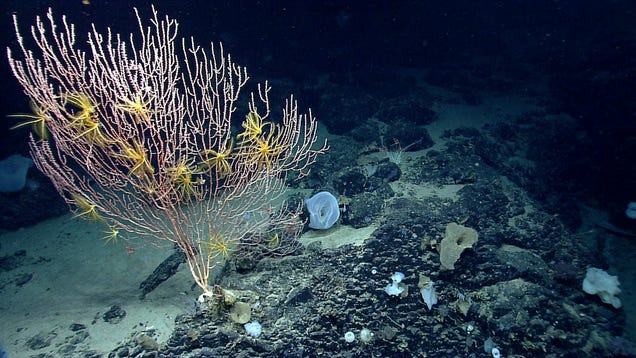 There s Now an  Underwater Yellowstone  off the Coast of Cape Cod