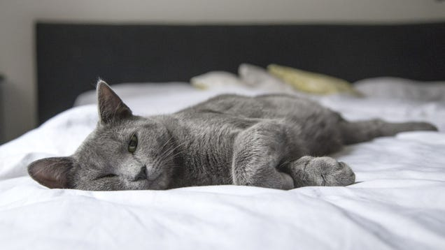 How to Make Your Home More Comfortable for Guests with Cat Allergies