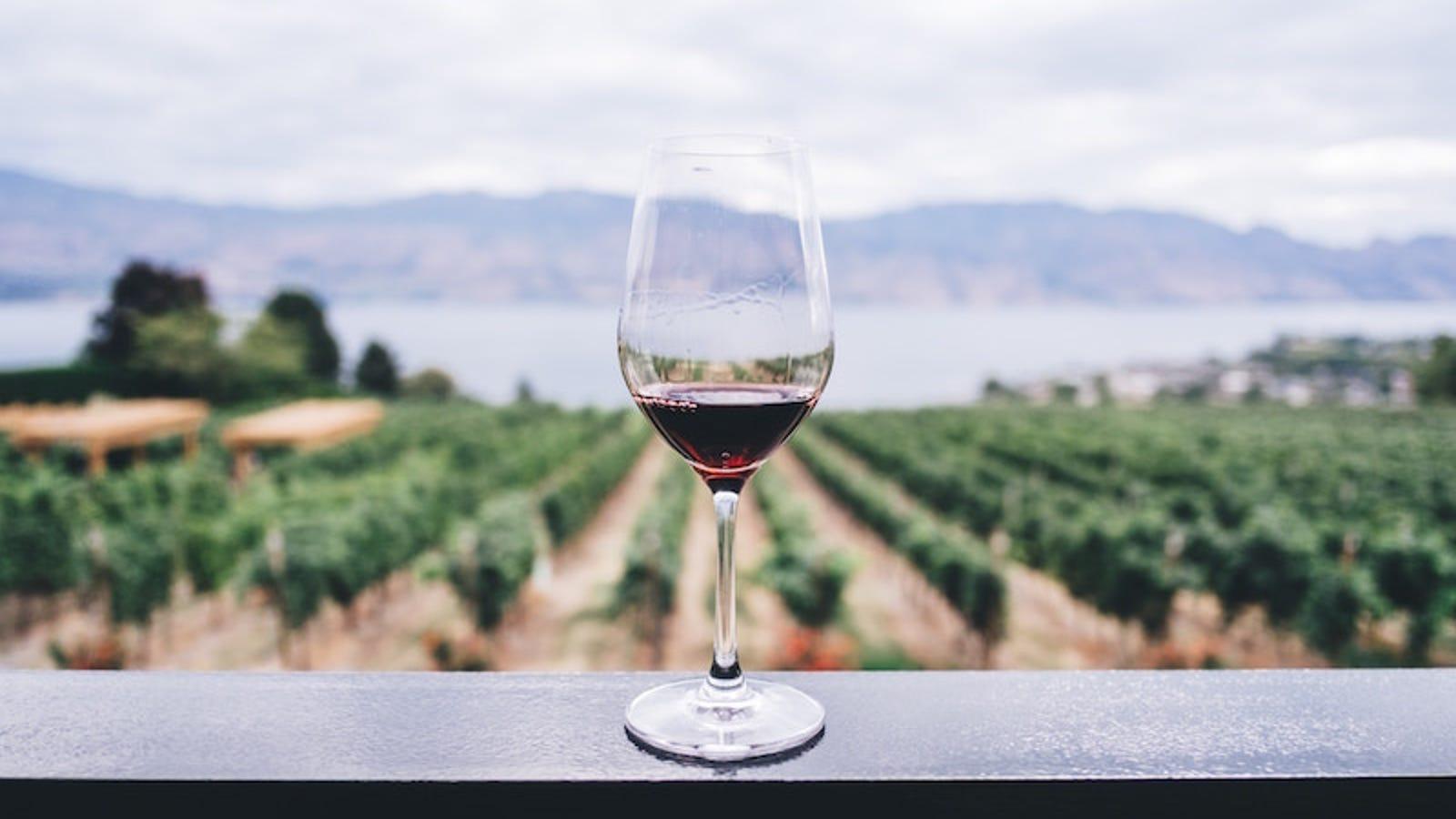 Por qué el diseño de una copa de vino puede afectar el sabor de la bebida