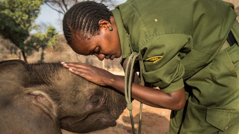At Reteti Elephant Sanctuary in Northern Kenya, Mary Lengees, one of Reteti's first female elephant keepers, caresses Suyian, the first resident.