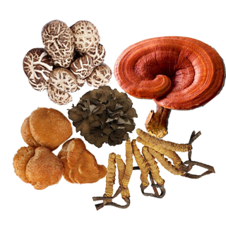 Illustration for article titled ganoderma lucidum spore oil softgel