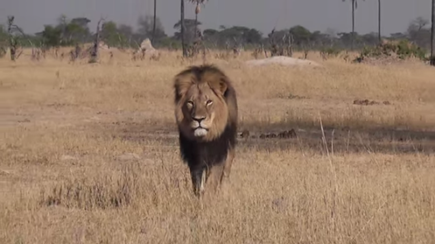 Everyone Really Fucking Mad at Weenie American Dentist Who Killed Lion