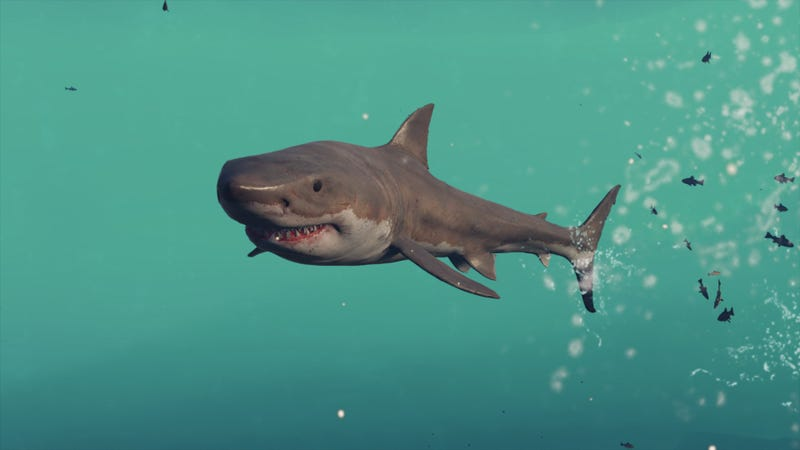 Assassin's Creed's Sharks Are Killing Me