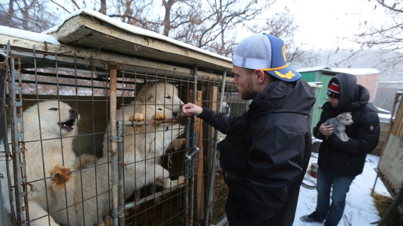 Illustration for article titled Gus Kenworthy Rescued a Puppy at the Olympics Again, This Time From a Dog Meat Farm