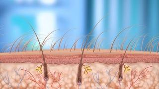 Illustration for article titled Does Shaving My Back Hair Make Me A Hypocrite?