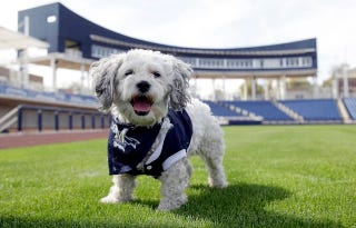 Illustration for article titled The Milwaukee Brewers' Adopted Stray Dog Is The Best Dog