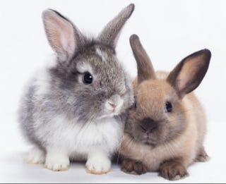 Illustration for article titled Whole Foods is Now Selling Rabbit, Angering the Pro-Bunny Lobby