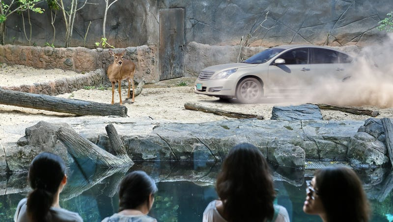 Illustration for article titled Driver Swerves To Avoid Deer Standing Right In Middle Of Zoo