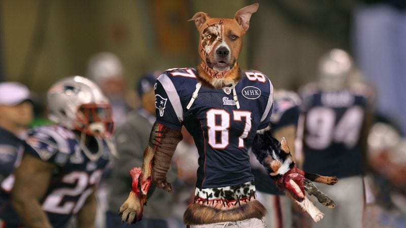 Illustration for article titled Bill Belichick Builds New Tight End From Mutilated Dog Parts