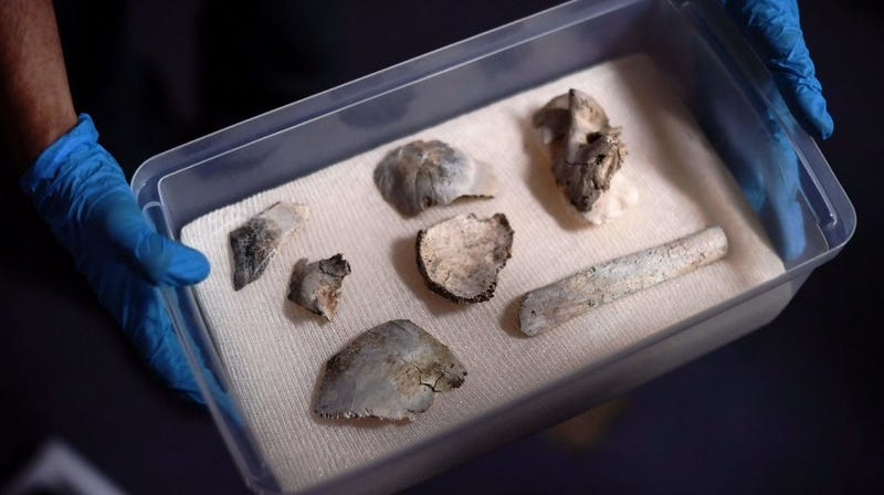 The recovered pieces of the Luzia skull.