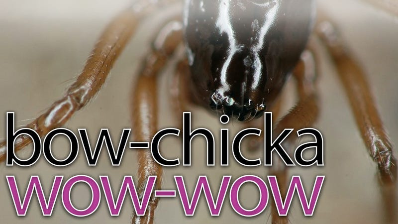 Illustration for article titled What do spiders have to do with internet porn?