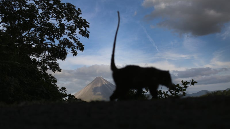 Arenal Volcano and monkey. Pura vida yo.