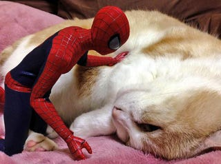 Illustration for article titled Spider-Man Shows His Sensitive Side with Cats