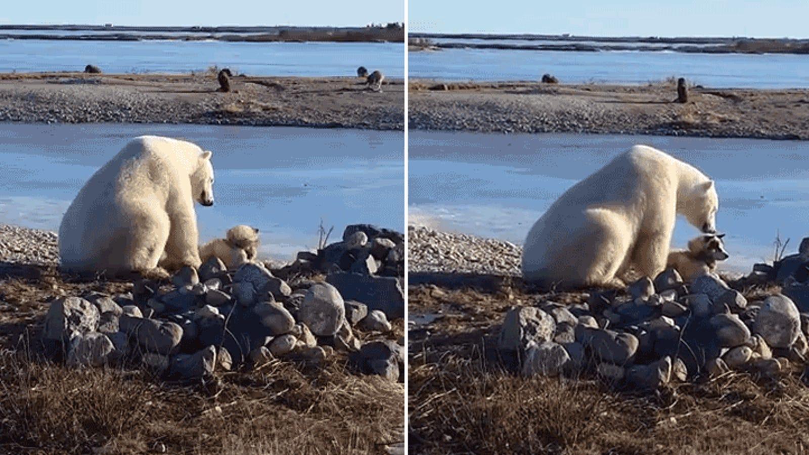 Este oso polar acariciando a un perro es el rayo de esperanza que hacía falta en 2016