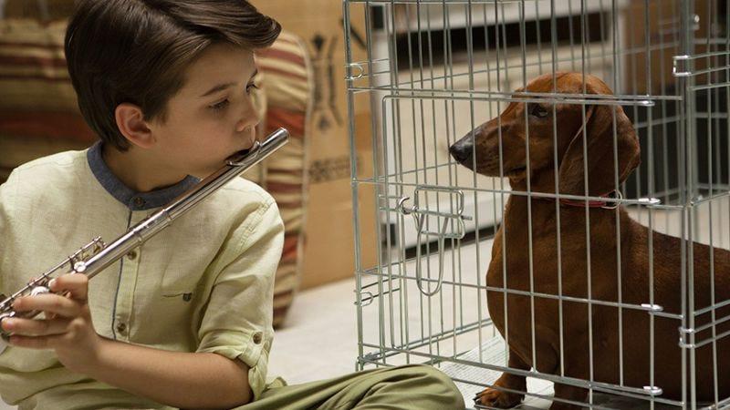 Wiener-Dog (Photo: Sundance Film Festival)