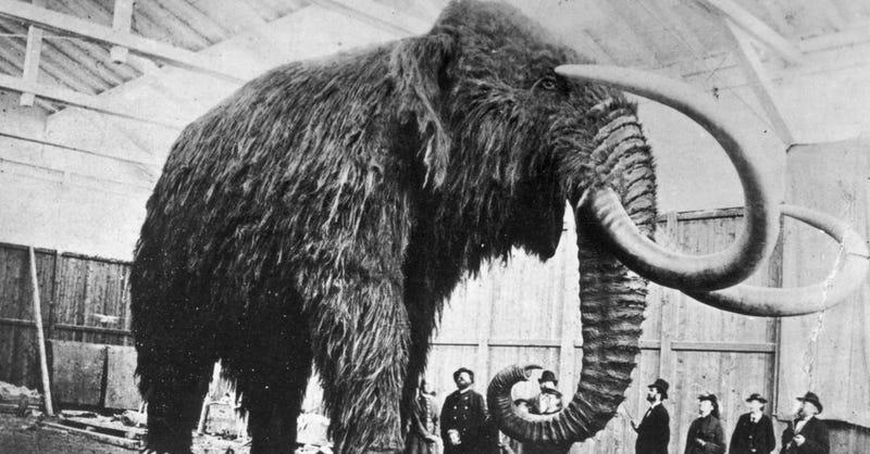 Illustration for article titled La mítica cena de 1951 en la que se sirvió carne de mamut en realidad solo sirvió tortuga