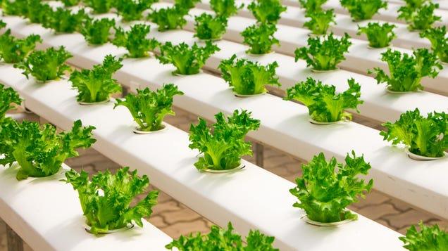 Lettuce Is Bullshit