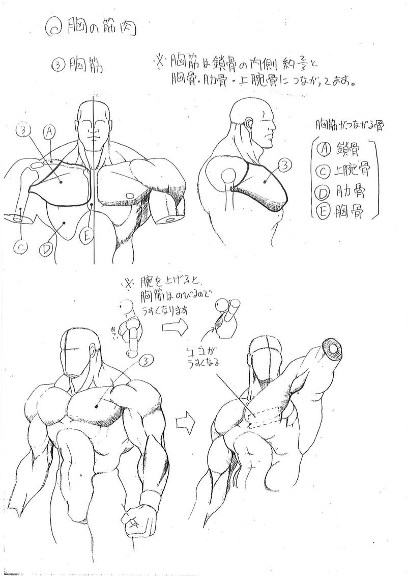 Capcoms Human Anatomical Reference For Artists Kotaku Uk