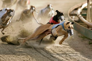 Illustration for article titled Greyhound Track Owners Now Want To Kill Off Their Own Industry