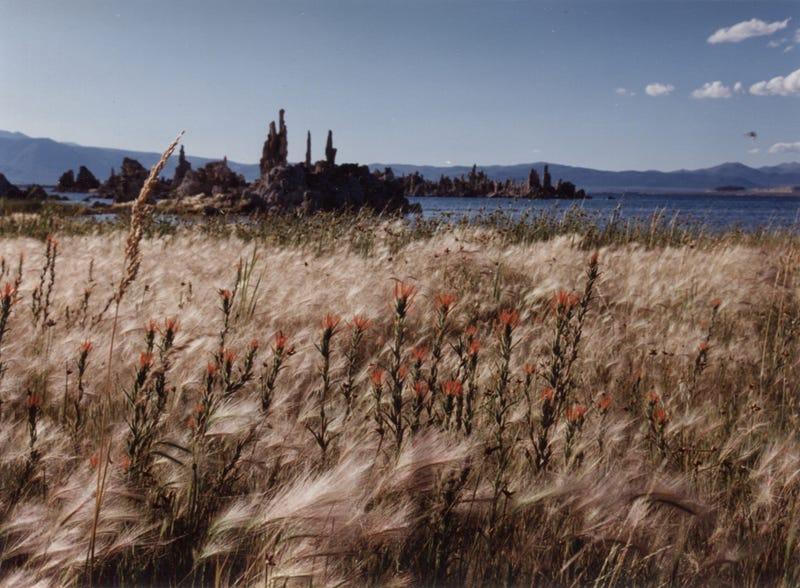 Illustration for article titled Mono Lake, California, 1993