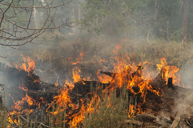 Western Wildfires Are Sending Carbon Offsets Up in Smoke