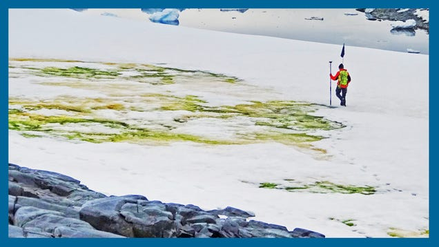 Climate Change is Turning Antarctica s Snow Green