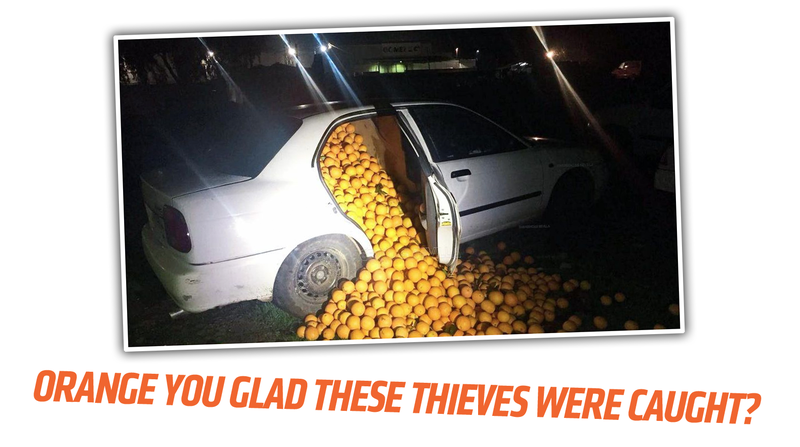 Illustration for article titled Spanish Orange Thieves Finally Prove How Many Oranges You Can Cram Into A Car