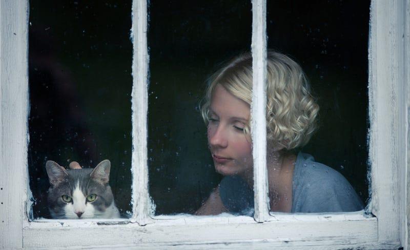 Illustration for article titled Un estudio confirma lo que sospechabas: los gatos no nos hacen caso