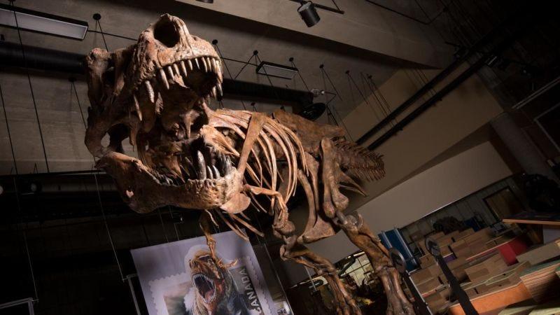 Illustration for article titled Paleontólogos de Canadá descubren el Tyrannosaurus rexmás grande conocido hasta la fecha: Scotty